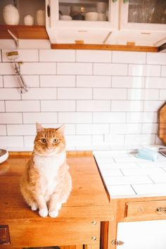 The (Not Very Satisfying) Reason Your Cat Keeps Knocking Stuff Off of Surfaces | Apartment Therapy