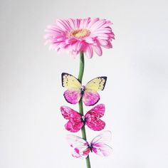 Leather Brooch Butterfly, Fashion Brooch of Real Leather, Pink and White