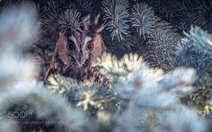 watchful eye by dubinkinv #animals #animal #pet #pets #animales #animallovers #photooftheday #amazing #picoftheday