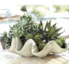 Succulents Growing in a Shell