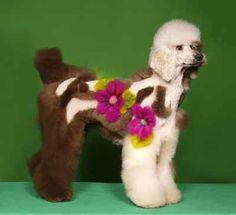 Dog Grooming idea?