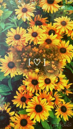 ☀ sun is shining and so are you ❤ aesthetics ❤ ayçiçekleri, Tumblr Backgrounds, Cute Wallpaper Backgrounds, Tumblr Wallpaper, Aesthetic Iphone Wallpaper, Aesthetic Wallpapers, Cute Wallpapers, Wallpaper Wallpapers, Aesthetic Backgrounds, Phone Backgrounds