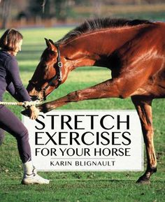 Stretch Exercises for Your Horse: The Path to Perfect Suppleness … Dressage, Horse Exercises, Horse Care Tips, Horse Riding Tips, Horse Books, Horse World, Horse Training, Horse Love, Show Horses