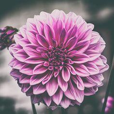 FUJIFILM Europe (@fujifilmeu) • Instagram-Fotos und -Videos Spring Pictures, Fujifilm, Europe, Videos, Plants, Instagram, Plant, Planets