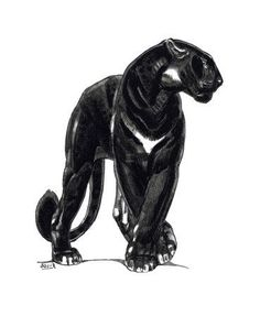 love this, would hang this in my home Animal Sketches, Animal Drawings, Art Sketches, Big Cats Art, Cat Art, Motifs Animal, Art Graphique, Cat Drawing, Black Panther