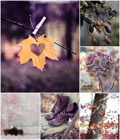 My moments of time ♥: Autumn love. Colour Schemes, Color Trends, Color Combos, Autumn Inspiration, Color Inspiration, Autumn Flatlay, Color Collage, Mood Colors, Autumn Aesthetic