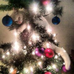 cats in christmas trees, cats ruining christmas trees pictures, gifs
