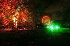 Many of the specimen trees at the Royal Botanic Gardens, Kew, have been illuminated especially for Christmas at Kew 2016.