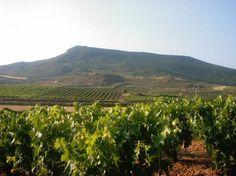 Rutas del vino: Rioja