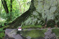 Overnight Oats mit gemischte Beeren im Park