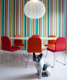 Fun Colors for a Dining Room + Pooch!
