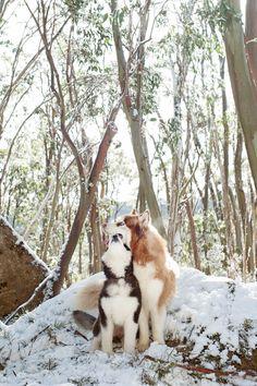 Snow Dogs <3 Photo by Kirstie M Photography | Pretty Fluffy | www.prettyfluffy.com