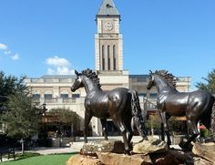 Explore Fun in the Sun in Katy Texas- This pin connects to a beautiful area