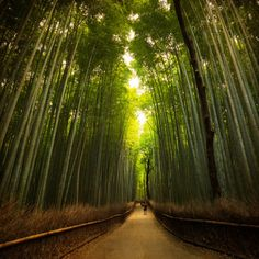 Finally find peace in this world. The agano Bamboo Forest found in Arashiyama, Japan is the perfect place to do just that. Oh The Places You'll Go, Great Places, Places To Travel, Beautiful Places, Places To Visit, Bamboo Forest Japan, Visit Japan, Worldwide Travel, Heaven On Earth