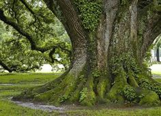 Beaautiful Trees