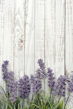 Download Bouquet lavender stock photo. Image of bouquet, flora - 44544312