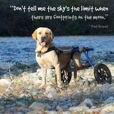 "Inspirational Quote of the Week: ""Don't tell me the sky's the limit when there are footprints on the moon."" ~ Paul Brandt Featuring Thor, @shara.teschuelin"