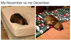 Where your entire personality begins to change… | 25 Pictures That Are Too Real If You're Slightly Obsessed With Christmas