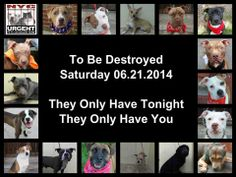 "TO BE DESTROYED: 17  Dogs to be killed by NYC ACC - SAT 6/21/14 -This is a HIGH KILL ""CARE CENTER"" . Too many great dogs put down daily! Babies, puppies, mamas, healthy, friendly dogs. POOR LIVING CONDITIONS CARE. Please help any way you can. See link if interested - read carefully: www.urgentpetsond..."