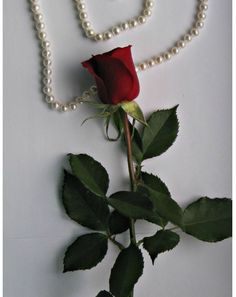 Single Red Rose, Red Roses, Pearl Necklace, Pearls, Jewelry, String Of Pearls, Jewlery, Jewerly, Beads