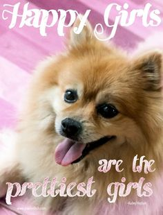 Audrey Hepburn Quotes Shared By Dogs: