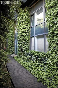 To me, a wall covered with Ivy is one of the best backgrounds for a vibrant, soothing urban garden.
