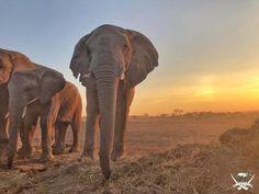 Good morning from Lundi and the Jabulani herd. Good Morning, Hedgehog, Elephant, Meet, Travel, Animals, The Beast, Buen Dia, Viajes