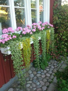 Container gardening plan 8647082461 to see today. Small Garden Landscape, House Landscape, Vegetable Garden Planters, Container Gardening, Most Beautiful Gardens, Beautiful Flowers, Window Box Flowers, Garden Boxes, Garden Paths