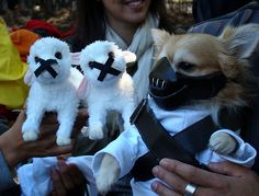25 Creative Dog Costumes
