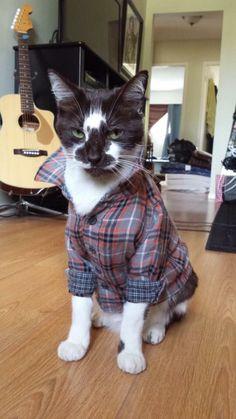 cute cat dressed in a flannel shirt