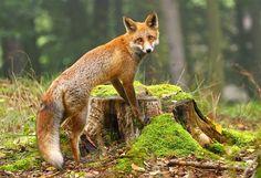 Spectacular Animal Photography by Miroslav Hlavko
