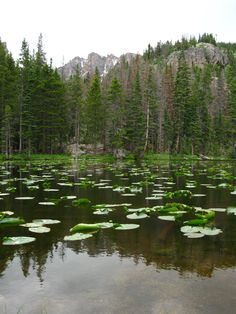 Nymph Lake, Estes Park, Colorado