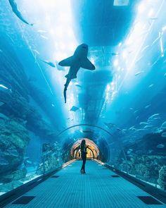 Witness the Beautiful Dubai Aquarium in UAE ! Dubai Dolphinarium, Dubai Aquarium, Stuff To Do, Things To Do, Top Place, United Arab Emirates, Aquariums, Abu Dhabi, Uae