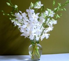 """10 long stem special white orchids with glass vase Guaranteed to last at least 7 days if """"SHIPS FROM AND SOLD BY JUST ORCHIDS""""at $31.70  http://www.bboescape.com/products/buy/691/say-it-with-flowers/Fresh-Flowers-Just-Orchids-White-Dendrobium-with-Vase"""