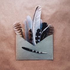 Blue and Peach Feather Collection in Faded Blue Envelope, Anna Remarchuk ☆ Indian Feathers, Bird Feathers, Feather Art, Instagram Blog, Taxidermy, Wings, Arts And Crafts, Fun Crafts, Tumblr