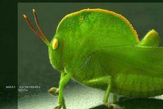 'Amazing Insects' - https://fbcdn-sphotos-e-a.akamaihd.net/hphotos-ak-ash4/421680_487655497943604_1059060484_n.jpg