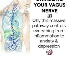 "Did you know that your vagus nerve is the longest nerve in your body? It starts in the brain, circles your digestive system, and connects directly to every organ. Did you also know that hospitals are already tracking ""vagal tone"" - your vagus nerve's abil Brain Health, Gut Health, Health And Wellbeing, Health And Nutrition, Health Benefits, Health Tips, Health Fitness, Heart Health, Nerf Vague"