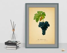Grape watercolor vintage botanical art poster picture antique wall living room home print wall print cubicle decor drawing watercolor art Watercolor Pictures, Watercolor Drawing, Old Paper Background, Botanical Wall Art, Poster Pictures, Kitchen Wall Art, Cubicle, Botanical Illustration, Poster Wall
