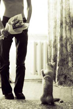 .EVERY CAT DESERVES FLOWERS...