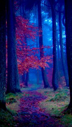 Autumn Scenery, Autumn Nature, Autumn Trees, Beautiful Nature Wallpaper, Beautiful Landscapes, Landscape Photography, Nature Photography, Scenic Photography, Blur Photo Background