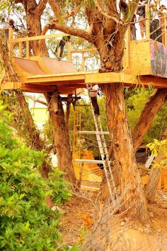 Half pipe treehouse