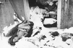The corpses of prisoners killed just prior to the evacuation of Auschwitz-Birkenau tumble out of a shed into the snow, immediately following the liberation.
