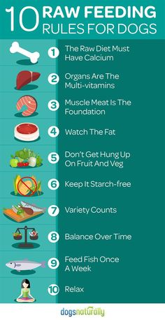 10 Rules for Feeding Your Dog Raw Dog Care & Health Tips for happy life -- Repin to your own inspiration board --