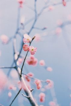 Find images and videos about nature and flowers on We Heart It - the app to get lost in what you love. Spring Birds, Spring Flowers, Rose Quartz Serenity, Sakura, Jolie Photo, Color Of The Year, My Flower, Mother Nature, Pretty In Pink