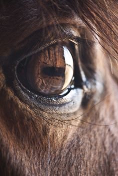 the eye of the #horse