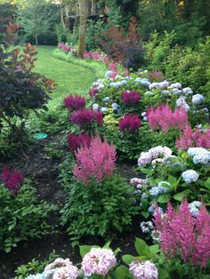 ASTILBES AND HYDRANGEAS IN JUNE