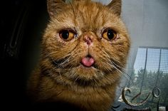i think this is a house cat>with a face only a mother could love!!!!! love him