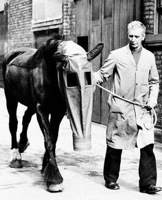 Horse with Gas Mask, WWII Training, Stable, War Training-Stable-Unknown location =Reproduction Antique/Vintage Photo Photograph Giclee Print on Etsy, $4.50