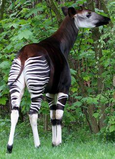 Amazing Animals, Animals Beautiful, Adorable Animals, Rare Animals, Animals And Pets, Exotic Animals, Unusual Animals, Animal Original, Les Continents