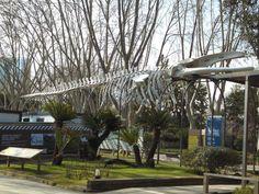 Mis foto excursiones: Zoo de Barcelona
